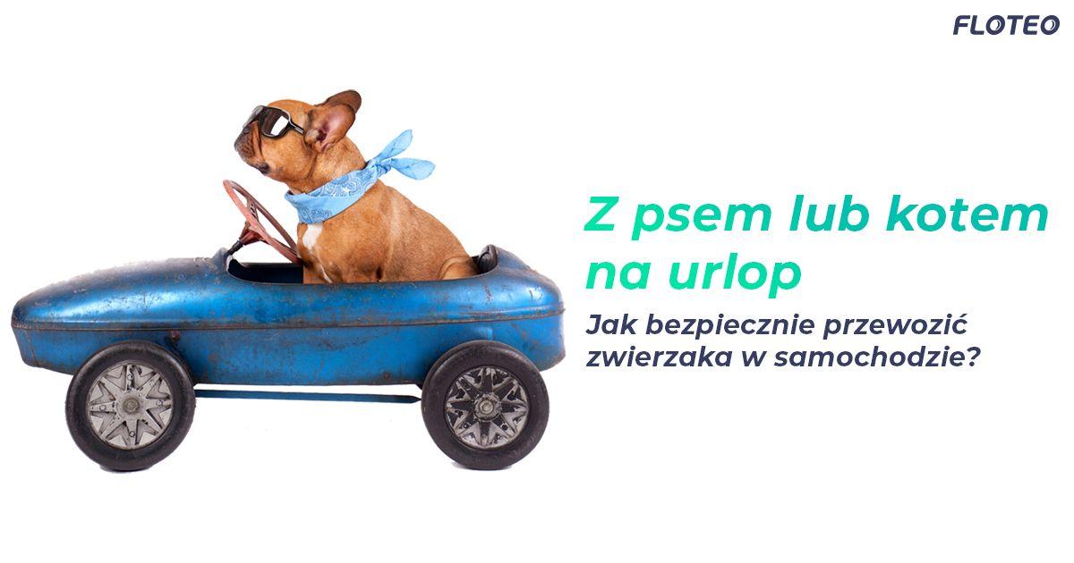 Jak bezpiecznie przewozić zwierzaka w samochodzie - kot, pies, urlop - porady Floteo, wynajem długoterminowy, leasing operacyjny